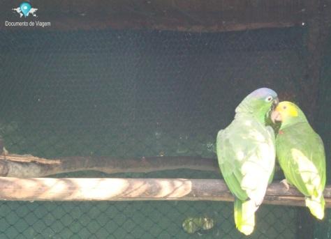 Parque das Aves