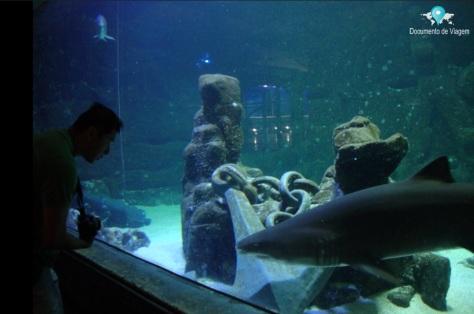 Tubarão Mangona