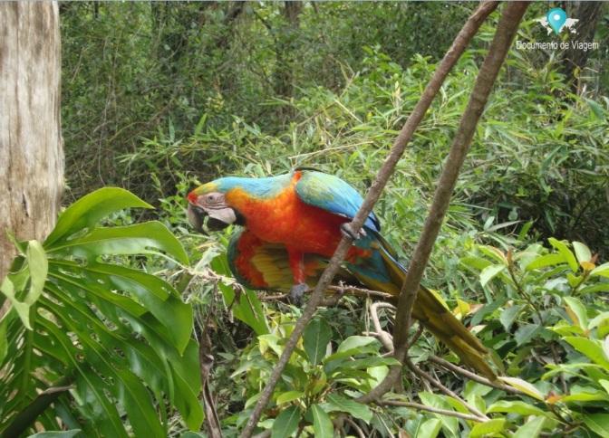 Gramado Zoo dedicado exclusivamente aos animais da fauna brasileira