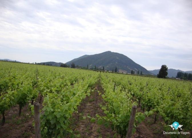 Três vinícolas para visitar perto de Santiago no Chile