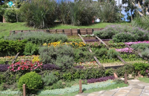 Patamares: cultivo de algumas plantas e flores