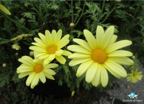 Amantikir - Jardins que falam