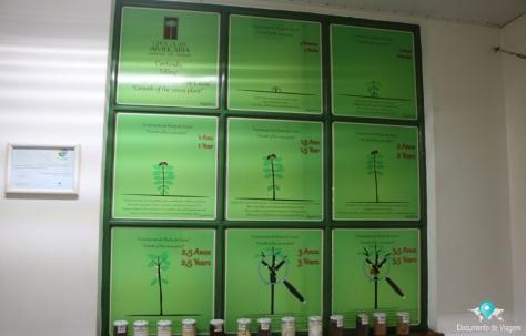 Fábrica de chocolate Araucária